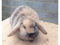 Baby rabbit for homing