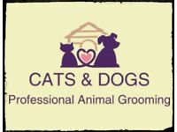 Cats & Dogs Professional animal grooming pick up drop off