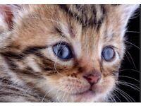 Tabby kittens | Cats & Kittens for Sale - Gumtree