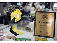 33rd British Tarantula Society Annual Exhibition