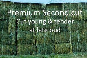 Premium Bales BIG Squares Alfalfa Orchard Timothy