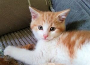 Thor,  Sasha & Sabastien- 3 month old kittens available to adopt