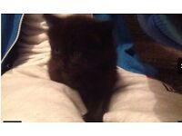 Kittens for sell