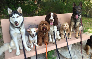 Reliable Dog Walker at Your Service!