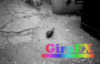 GiraFX Photo Retouch, Repair, & Film Services