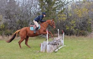 Job on horse farm - riding and general farm duties