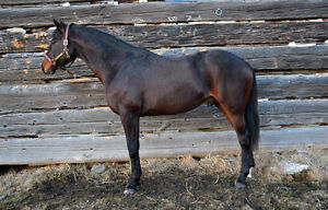 Stallion Standing - $550 Inclusive Rate