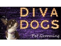 🐩🐩Professional Dog Grooming 🐩🐩