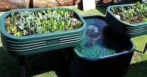 Aquaponics, grow your own fish and vegetables Greenwood Joondalup Area Preview