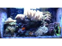 Marine fish tank, contents only