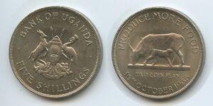 £0380 - Uganda Five Shilling 1968 KM#7 FAO Cow & Calf - <span itemprop=availableAtOrFrom>Großgmain, Österreich</span> - Widerrufsbelehrung: Widerrufsrecht Sie haben das Recht, binnen eines Monats ohne Angabe von Gründen diesen Vertrag zu widerrufen. Die Widerrufsfrist beträgt vierzehn Tage ab dem Tag, an - Großgmain, Österreich