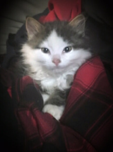 1 Left Very Affectionate Kitten To Give