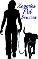 Zoomies Pet Services is Looking For Volunteers!