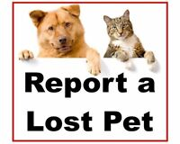 Greater Sudbury area Lost & Found PETS (Missing Cats & Dogs)