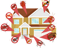 Lowest price on pest control service!