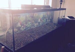 Urgent Moving Sale - 130 Gallon Aquarium with Accesories
