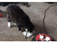 13 year old cat needing new loving home