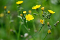 Remove all your weeds form backyards, lawn and garden.