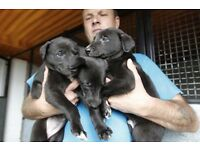Kennel Registration **DOG PEDIGREE PAPERS**New Breeder Registrations welcome