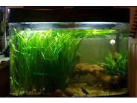 60l full aquarium set up