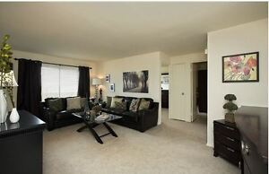 Two Bedrooms: Walk to Northland Mall & all Amenities London Ontario image 3