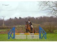 16hh Irish sports horse for share/part loan