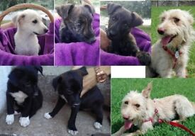 Save a life - adopt a puppy! (all female)