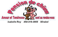 PENSION DE CHIEN