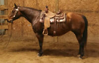 16 YEAR OLD,15 HAND MARE, FINISHED CUTTING HORSE**VIDEO**