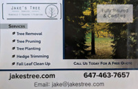 Affordable Tree Removal - Jake's Tree Service
