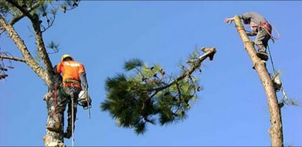 Tree cutting services Gladesville Ryde Area Preview