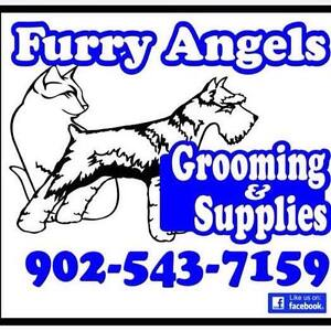 Wanted Professional  Pet Groomer (Cats and Dogs)