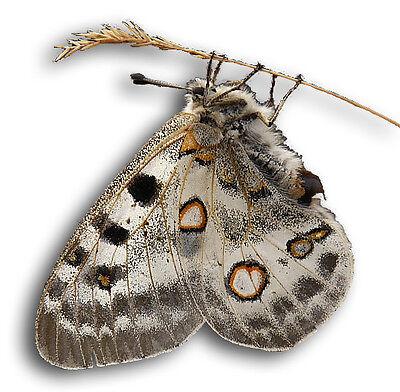javiercarp11-Butterflies and Betles