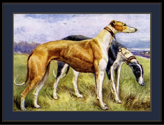 English Print Greyhound Puppy Dog Dogs Puppies Duo Art Vintage Poster