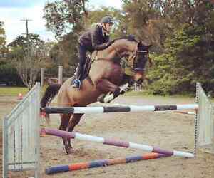 Horse Riding Lessons - Qualified Equestrian Australia Instructor Maroochydore Maroochydore Area Preview