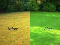 Get Your Grass Looking Good