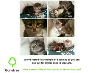 Beautiful Kittens -- Read the ad before replying!!!