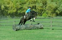 8 Year Old TB Mare