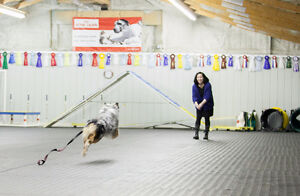 Group Obedience/ Agility/ Show Handling and Puppy Classes