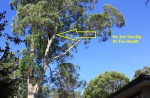 Athelstone Tree Pruning and Lopping Service Athelstone Campbelltown Area Preview