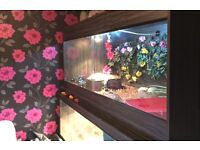 Vivarium 6ft length by 3ft heigh by 3ft wide