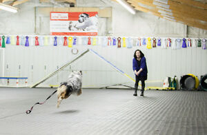 Dog Training Obedience, Agility, Show, Rally and Puppy Classes