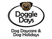 Doggie Days Teesside dog day care, home boarding & walking Teesside
