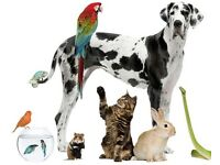 Pet services - Dog walking / walker /sitting & boarding .domestic pet feeding/holidays