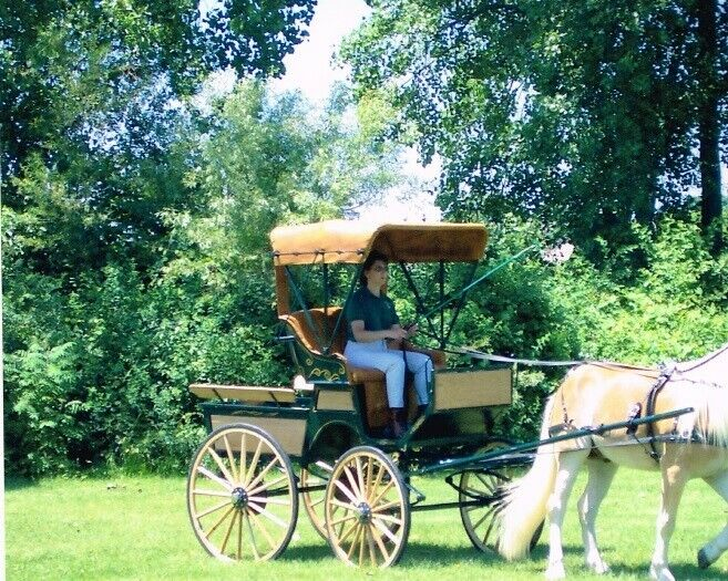 horse drawn carriage Cob Size
