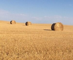 WHEAT STRAW FORSALE- FEED BEDDING
