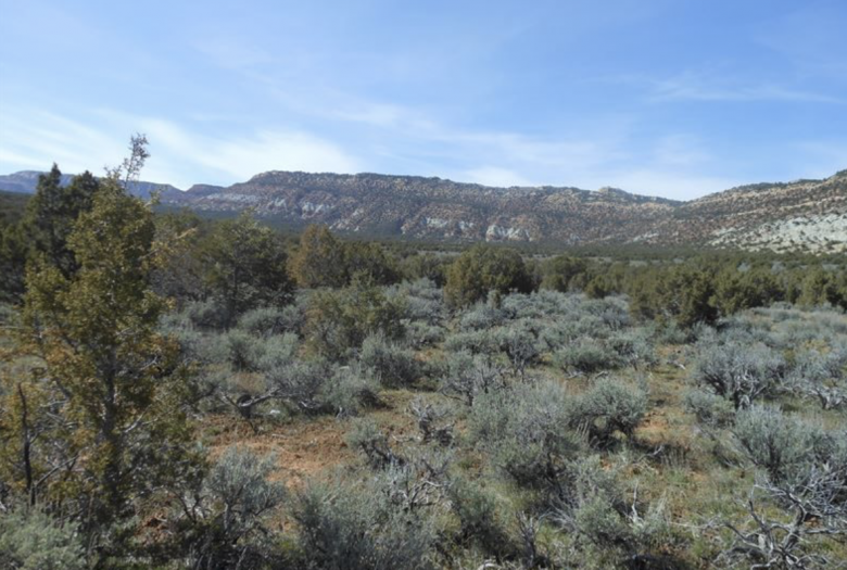 MOFFAT COUNTY COLORADO GOLD MINING CLAIM PLACER  - $730.00
