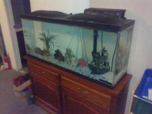 55 gal aquarium,stand and all accesories