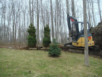 White Spruce Tree's For Sale, Tree Planting