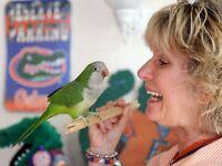 Amazing pair Quakers talking Parrots Bargain Only Each £89